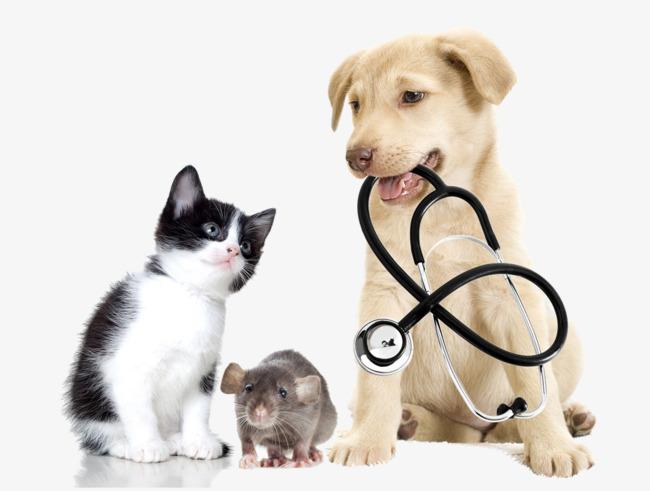 Kết quả hình ảnh cho chó mèo đi khám bác sĩ