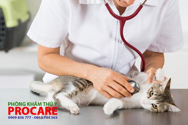 các bện siêu vi ở mèo