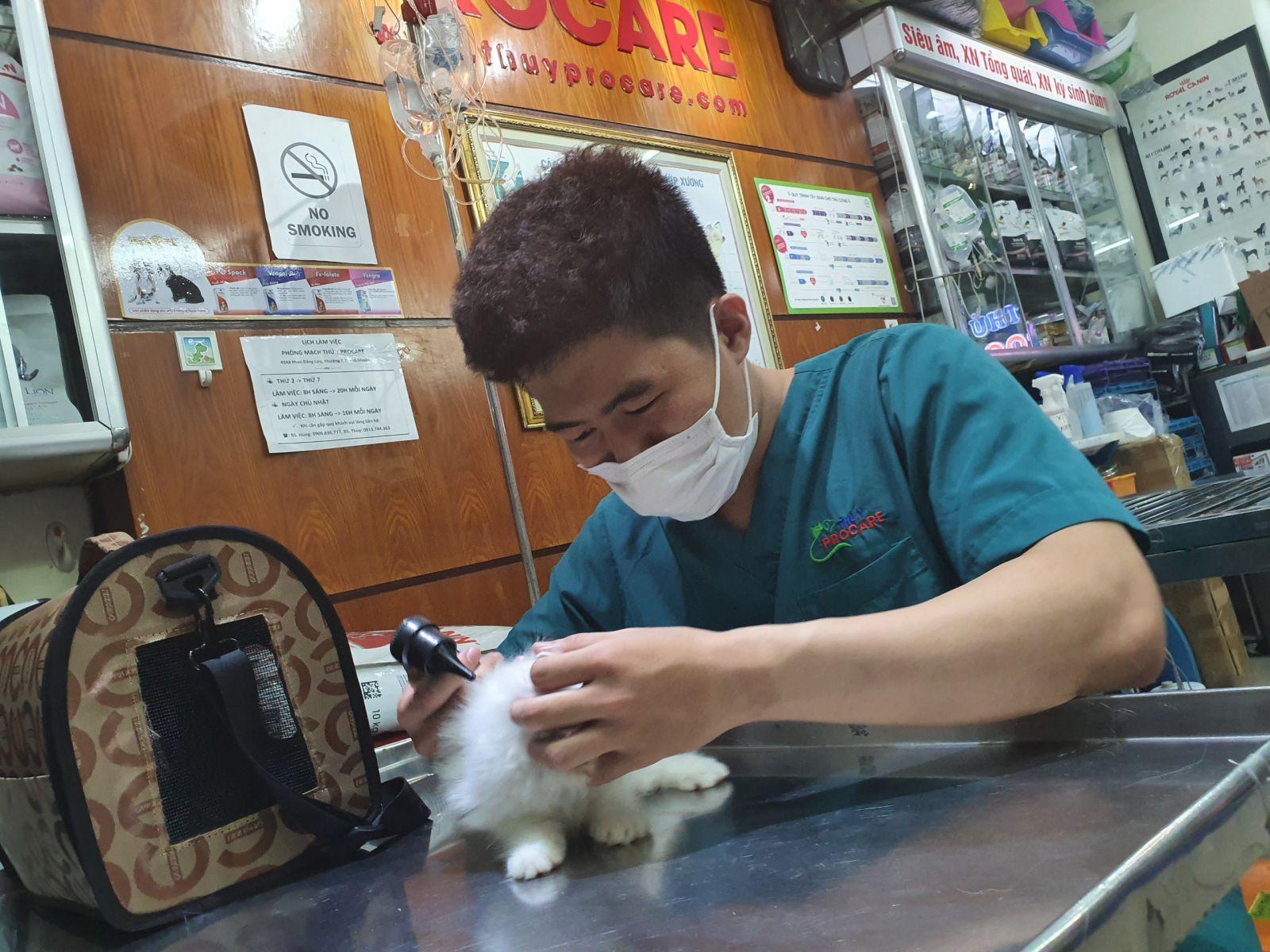 các bệnh siêu vi trên mèo