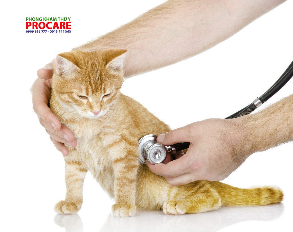 các bện siêu vi trên mèo