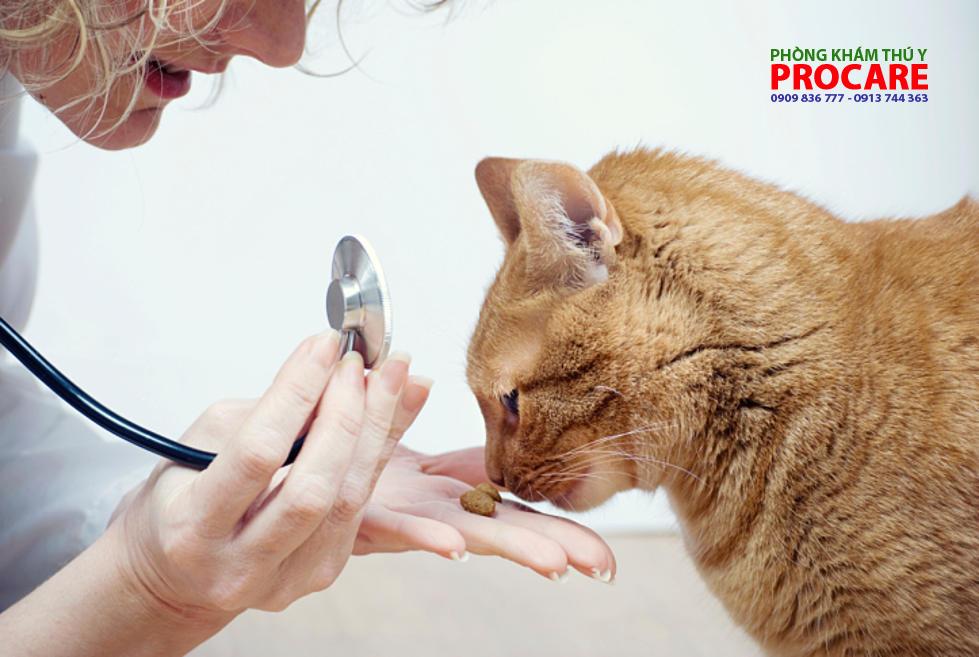các bện thường gặp ở mèo
