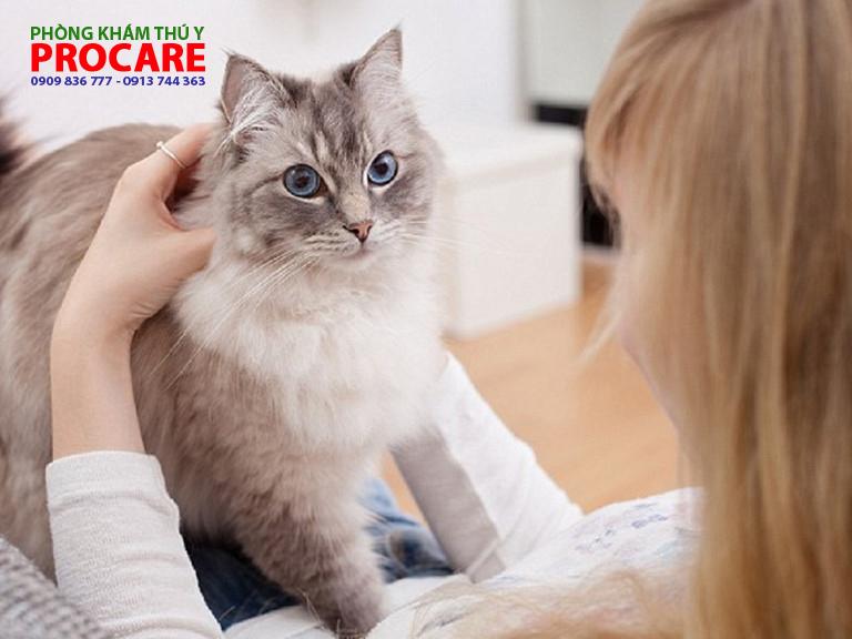 các bệnh thường gặp trên mèo