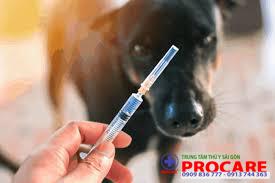 tiêm phòng bệnh dại trên chó