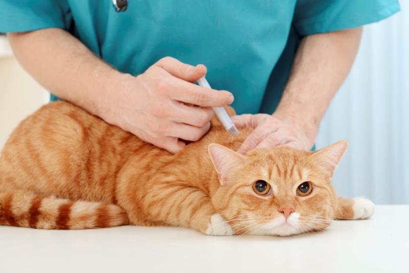 Tại sao phải chích ngừa cho chó mèo