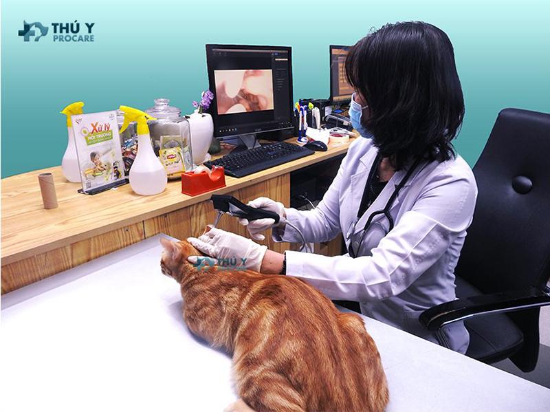 Dịch vụ điều trị chó mèo